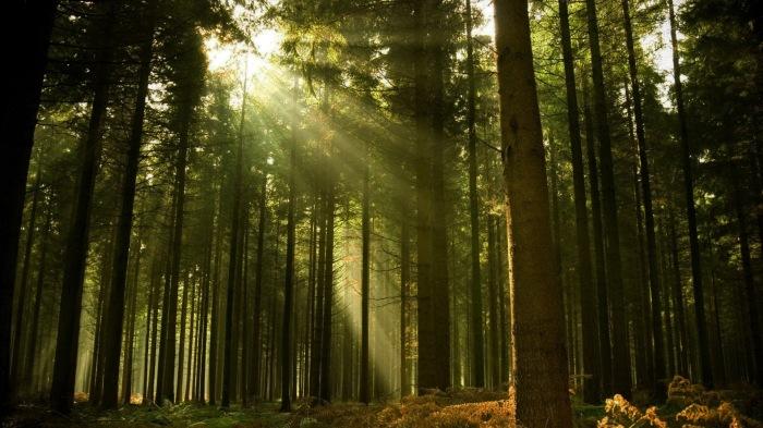 bosque-frondoso2